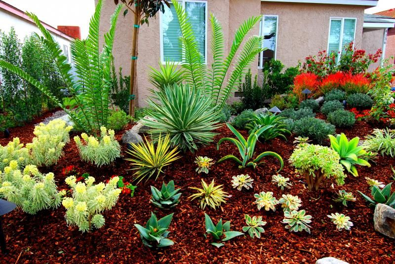 Encephalartos plants surrounded by drought tolerant for Front yard landscaping plants
