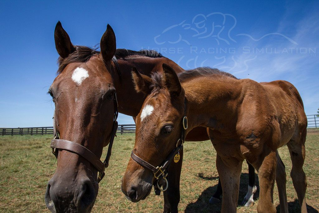 Stephen Got Even 's filly and her dam checking us out as we take this photo of them.