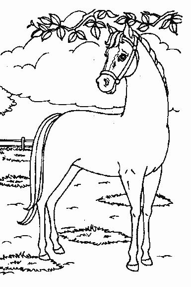 Google Kleurplaten Paarden.Google Kleurplaten Paarden Nvnpr