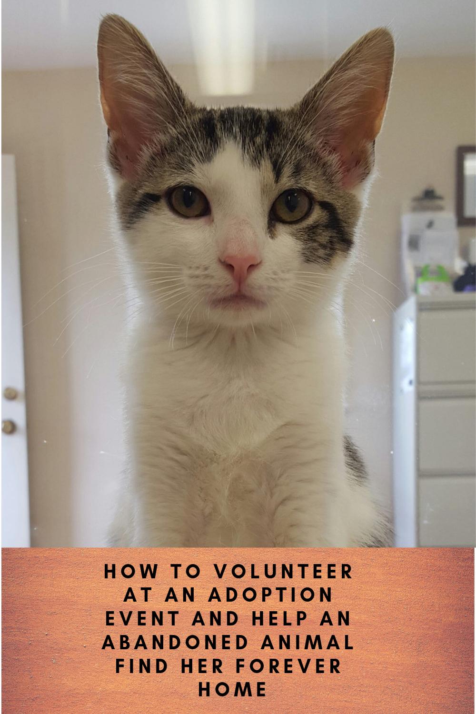 Adoption Events Helping At The Shelter Adoption Animal Shelter Pet Adoption
