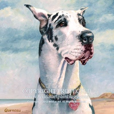 Bodhi Harlequin Great Dane Pet Portrait Oil Painting On 12 X