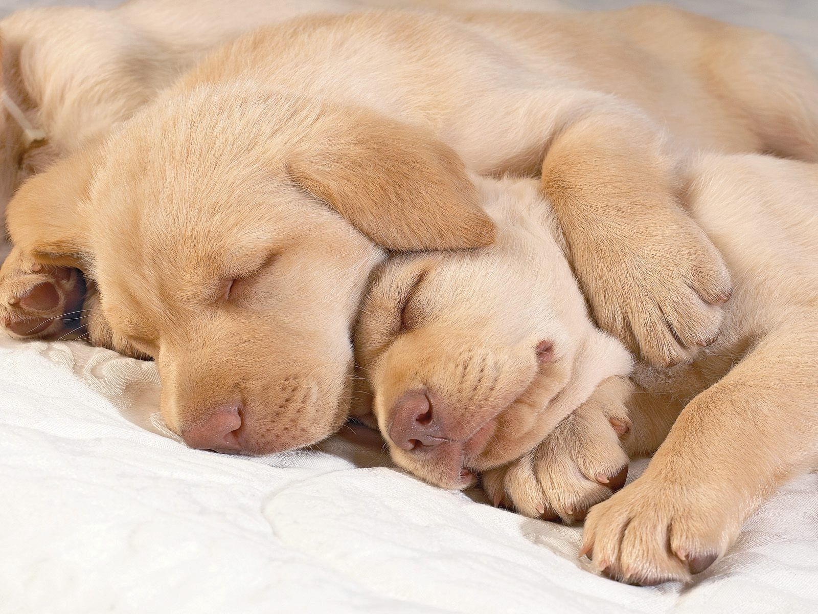 My Dogs Sleeping Puppies Sleeping Dogs Animal Hugs