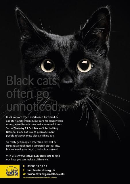 Tomorrow Is National Black Cat Day Paperblog National Black Cat Day Black Cat Day Black Cat