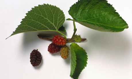 Foraging: 52 Wild Plants You Can Eat Part I