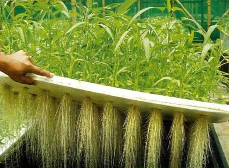 aeroponics can reduce the usage of water by 82 percent
