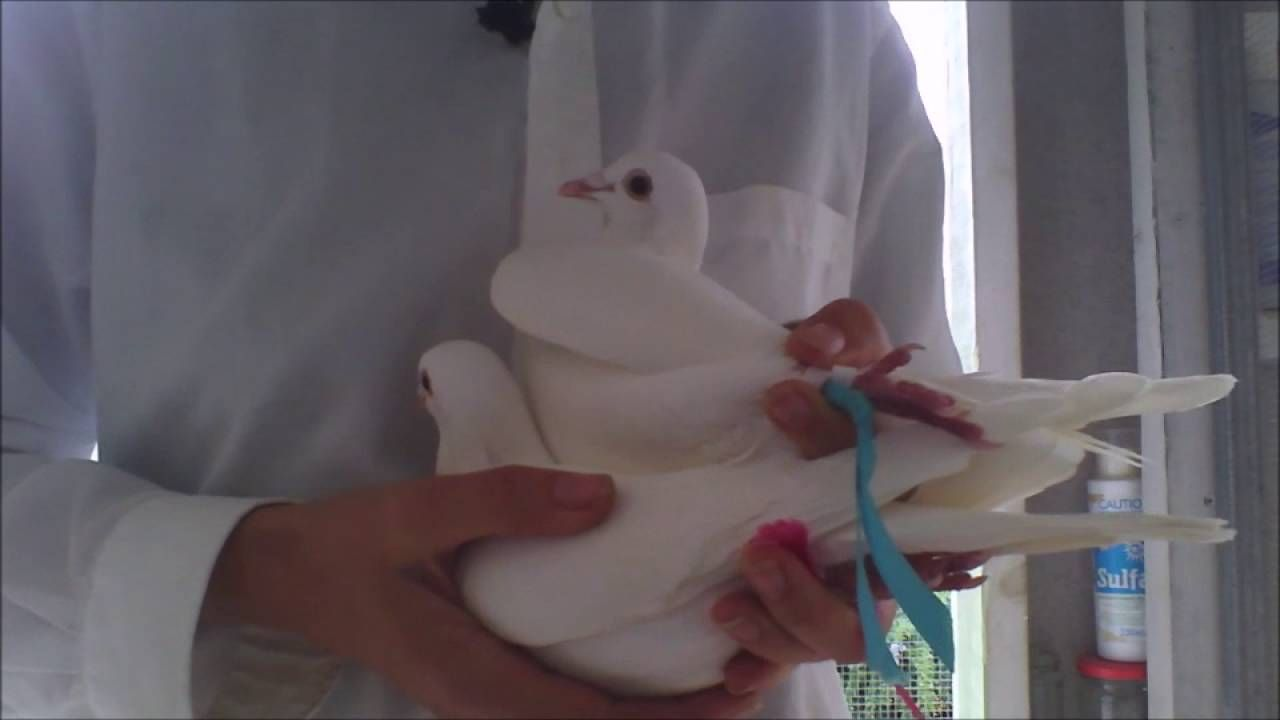 White Release Doves wear Infant Loss Awareness Ribbons June 2016