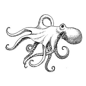 Pin by Anne on Octopus and Squid | Octopus drawing ...