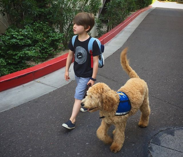 When A Man Questioned My Son S Need For A Service Dog Service