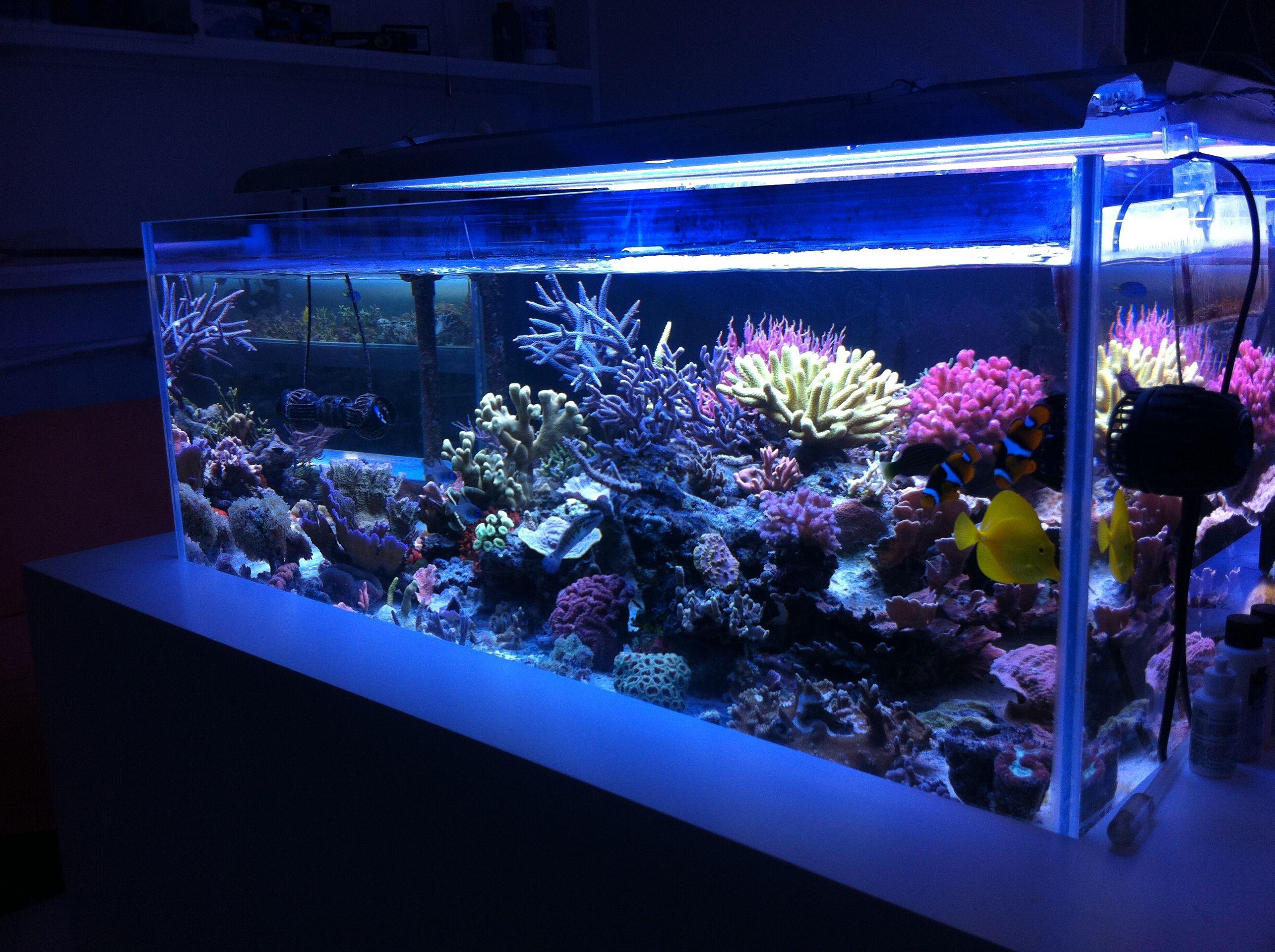 Moj Morski akvarijum