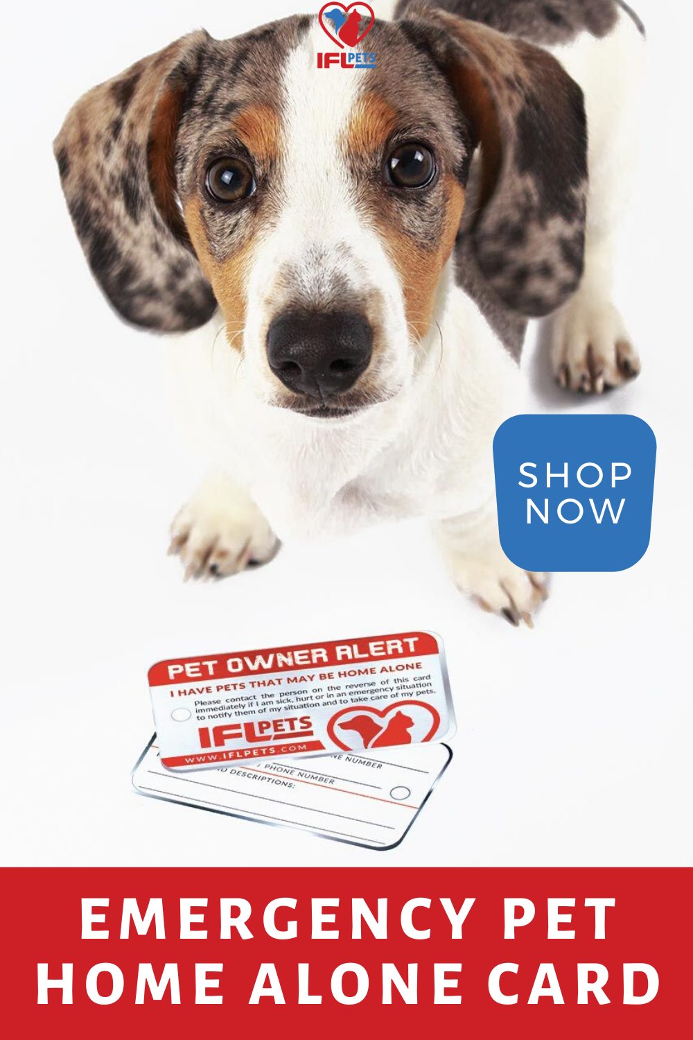 Pin On Cool Pet Owner Gifts