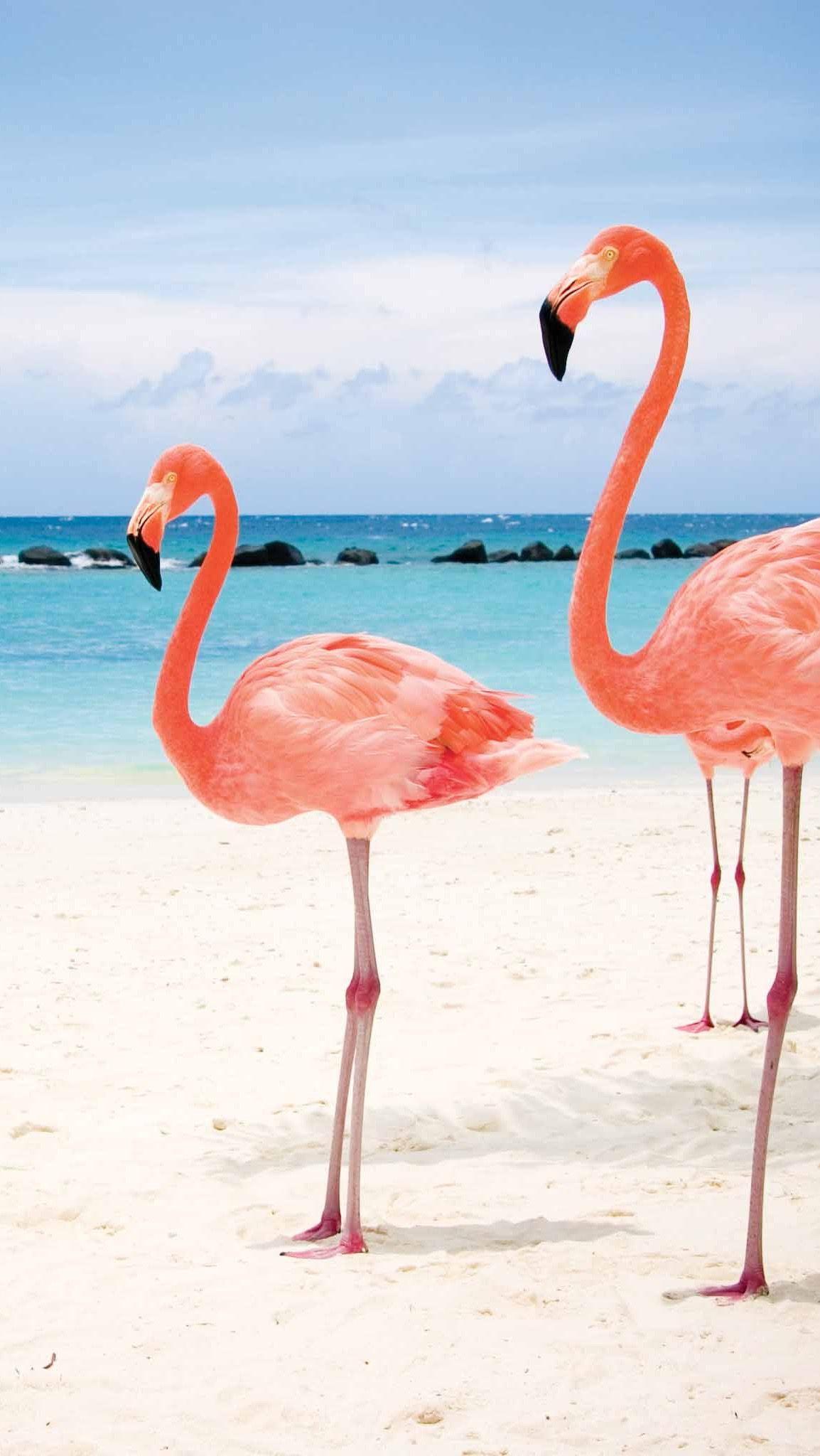 Обои wallpapers iPhone flamingo Пляжные картины