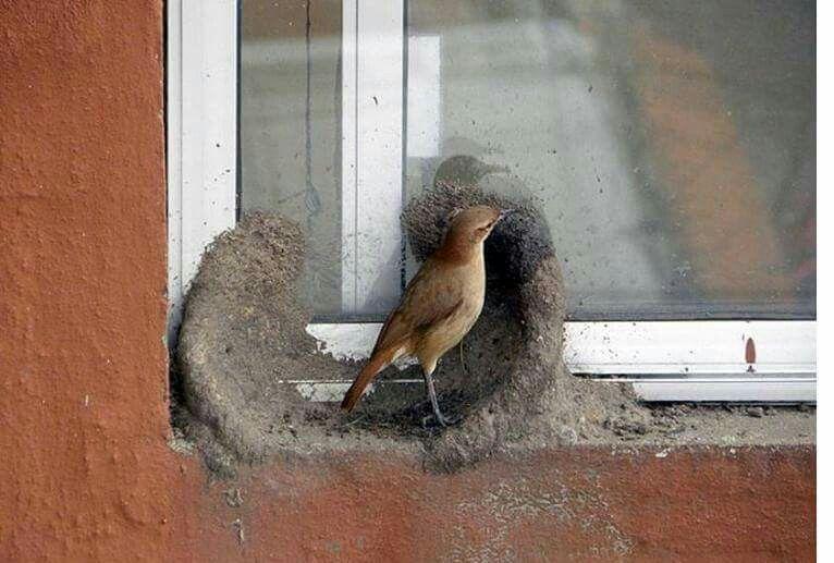 Birds are wonderful engineers. Birds, Bird watching