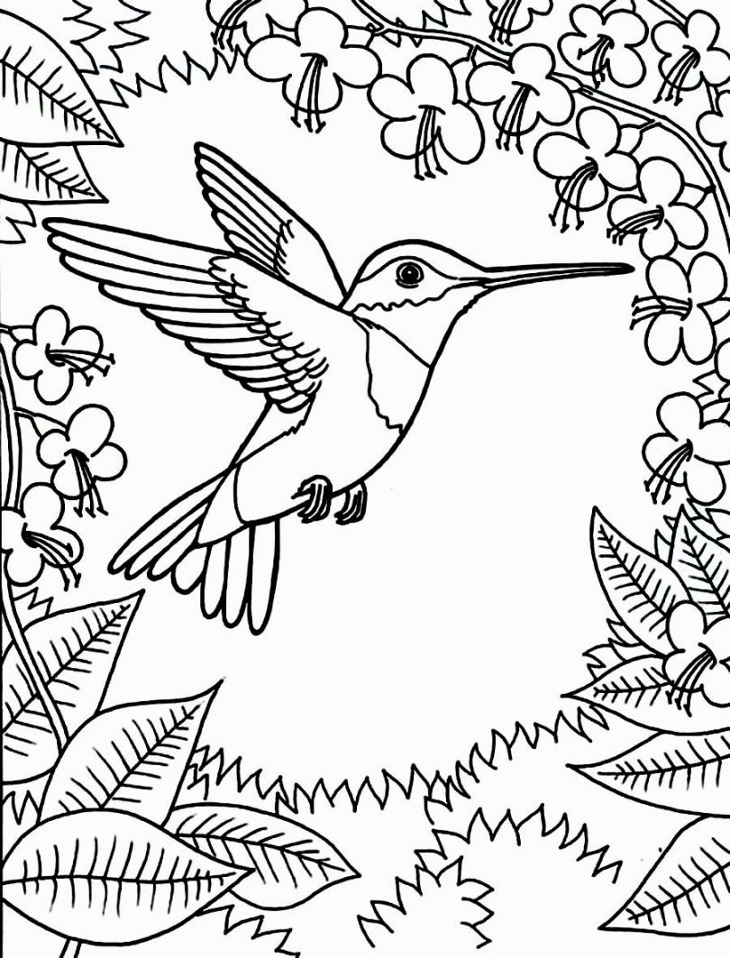 Printable Hummingbird Coloring Pages Free Online Sheets For Kids Get The Latest Images
