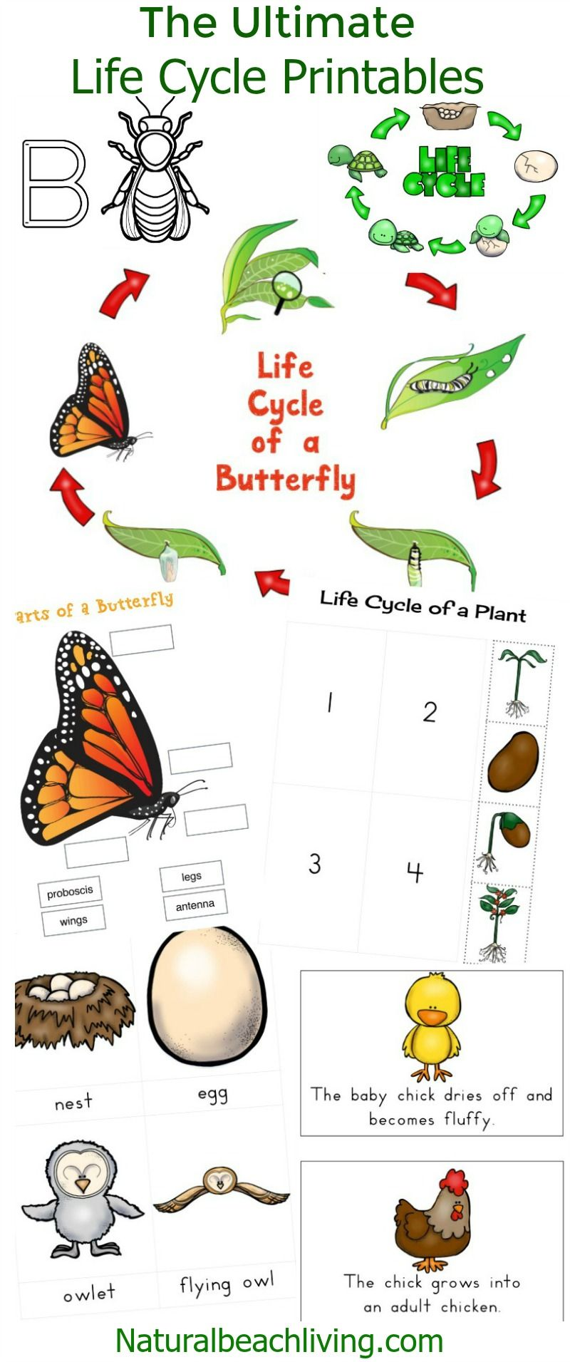 the ultimate life cycle printables life cycles animal habitats the ultimate life cycle printables for preschoolers and kindergarten butterfly life cycle frogs