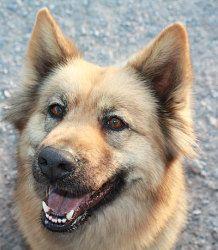 Adopt Kelly On Furry Friends German Shepherd Dogs Dogs