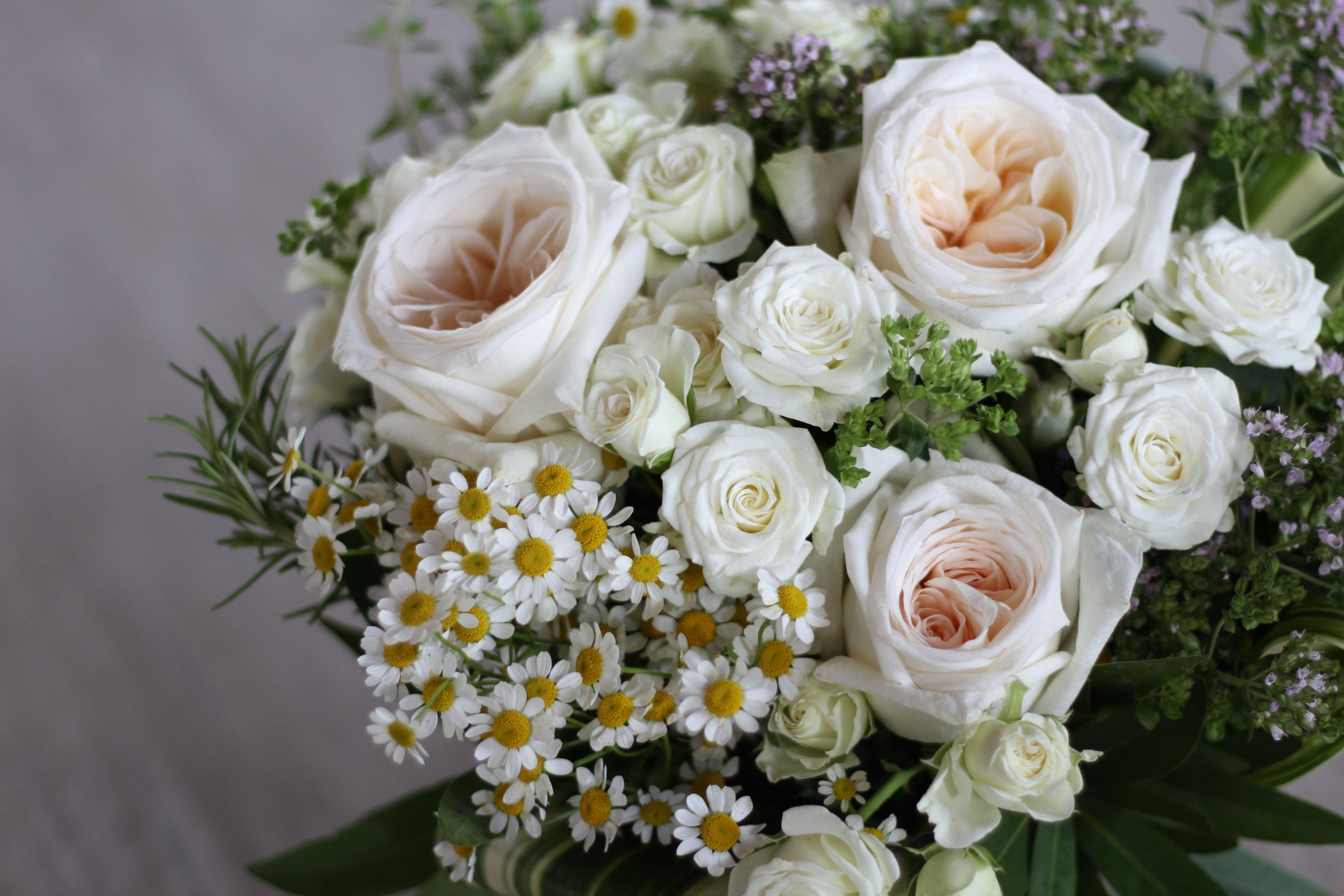 Three Varieties Of Unique White Garden And Spray Roses Chamomile