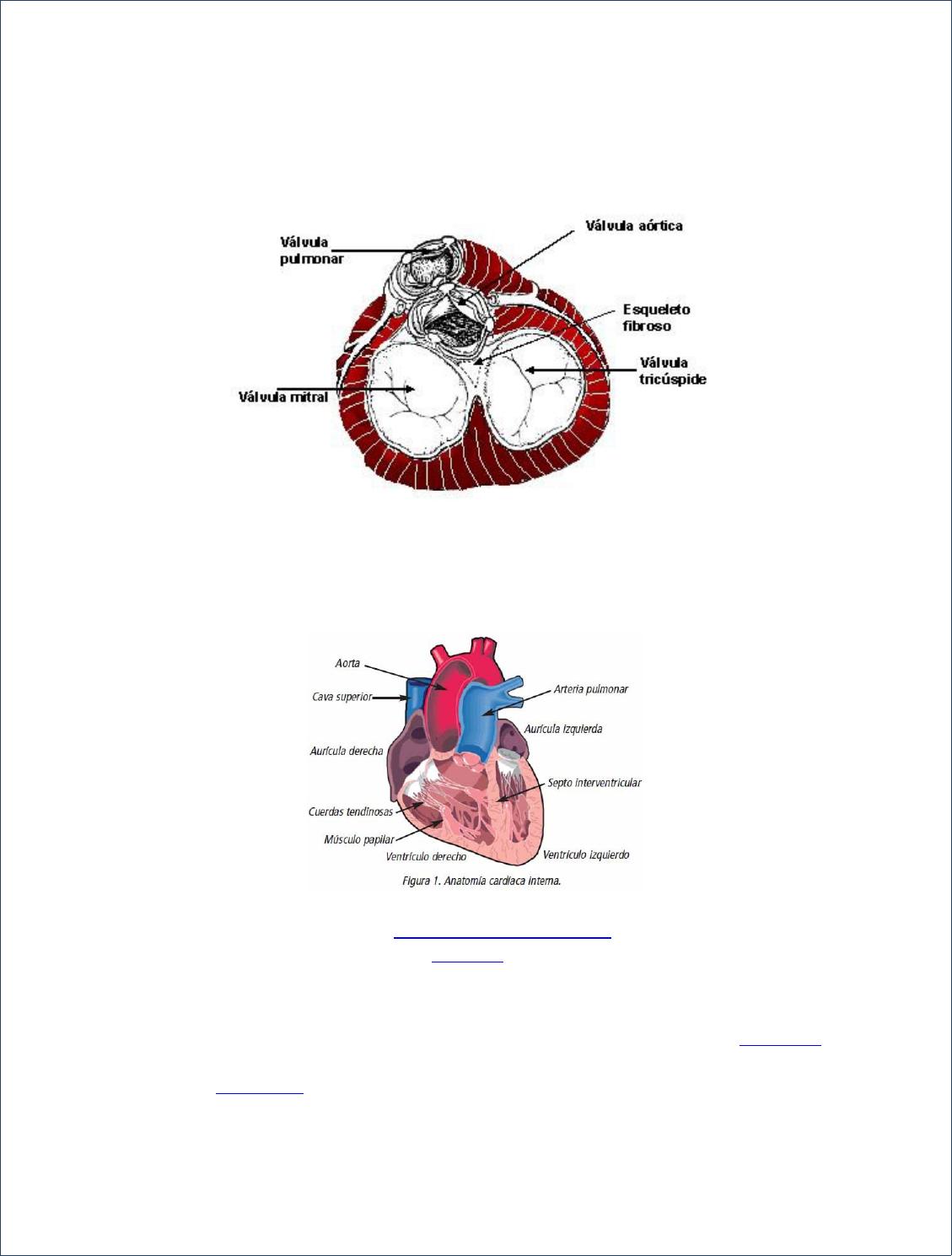 Esqueleto Cardiaco - Documents   Histología   Pinterest   Pinturas