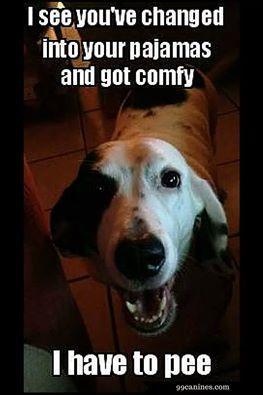 Denver Our Guilty Dog S Photo Funny Dog Fails