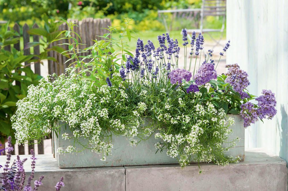 Damit es summt und brummt: Bienenfreundliche Balkonblumen