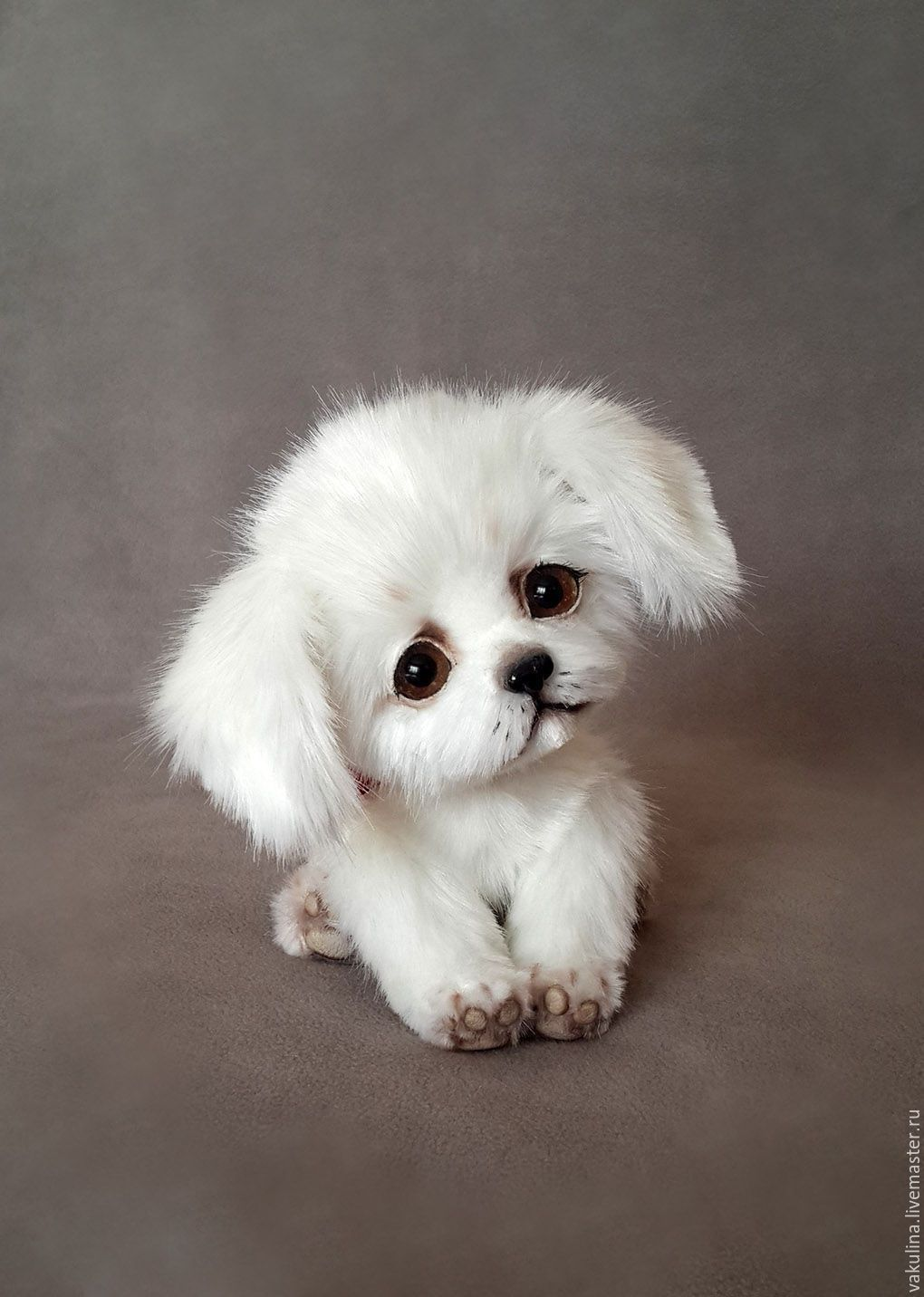 Pin Auf Puppies