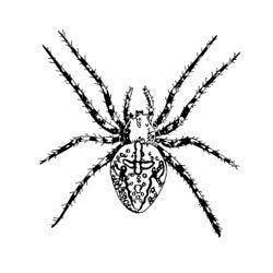 Unmounted Rubber Stamp Garden Spider by CarolynsStampStore on Etsy