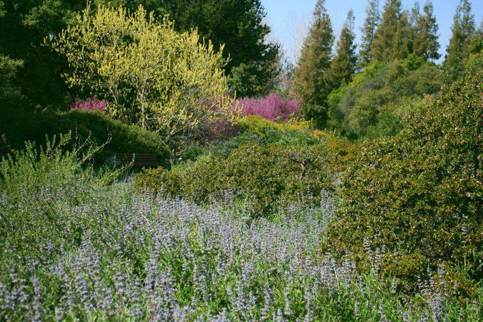 Beautiful color in the Garden right now. — Rancho Santa