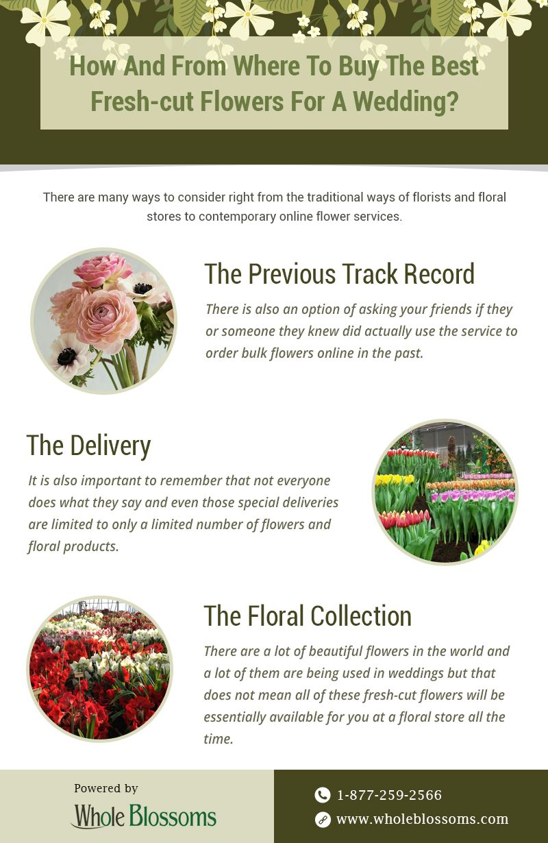This Infographic Is Designed To Provide The Useful Information About