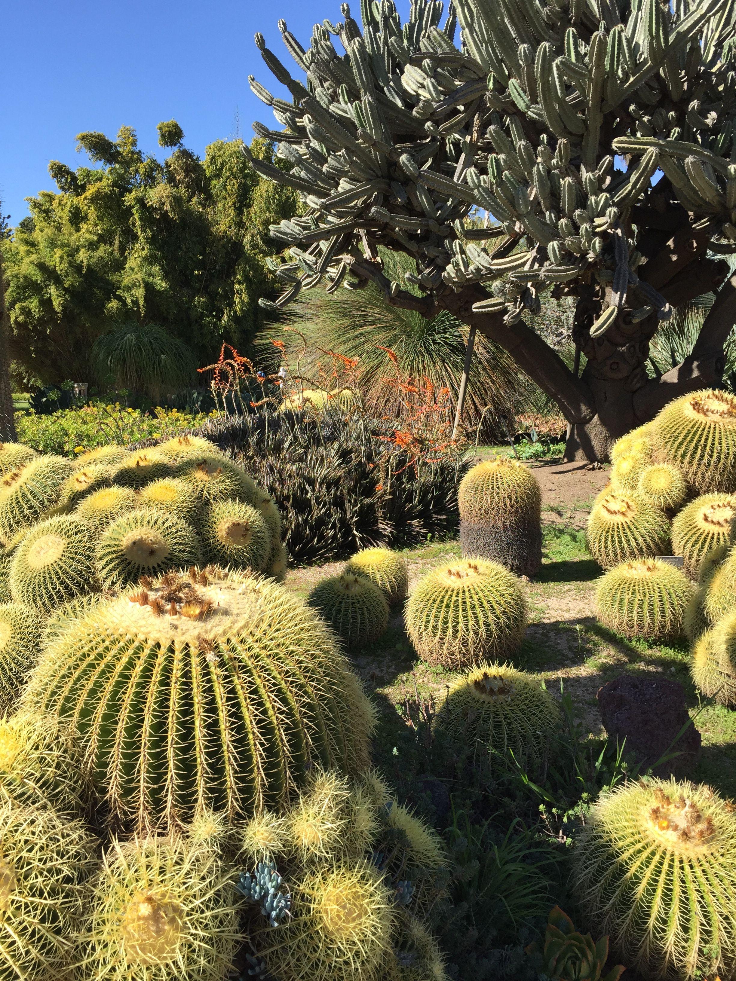 Cactus gardens at Huntington | gardens: huntington botanical, san ...
