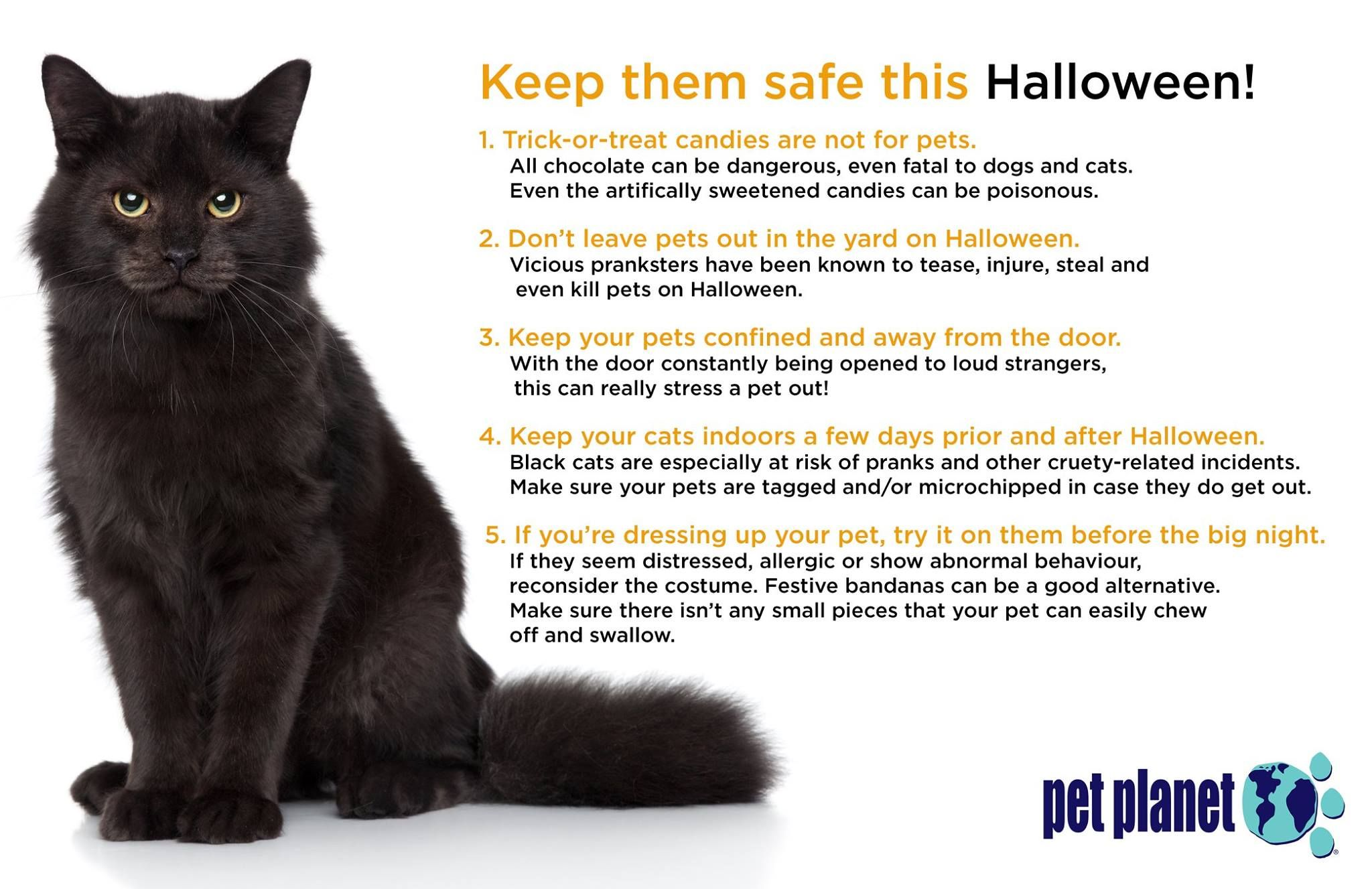 Keeping Your Pets Safe This Halloween Pets Pet Store Pet Safe