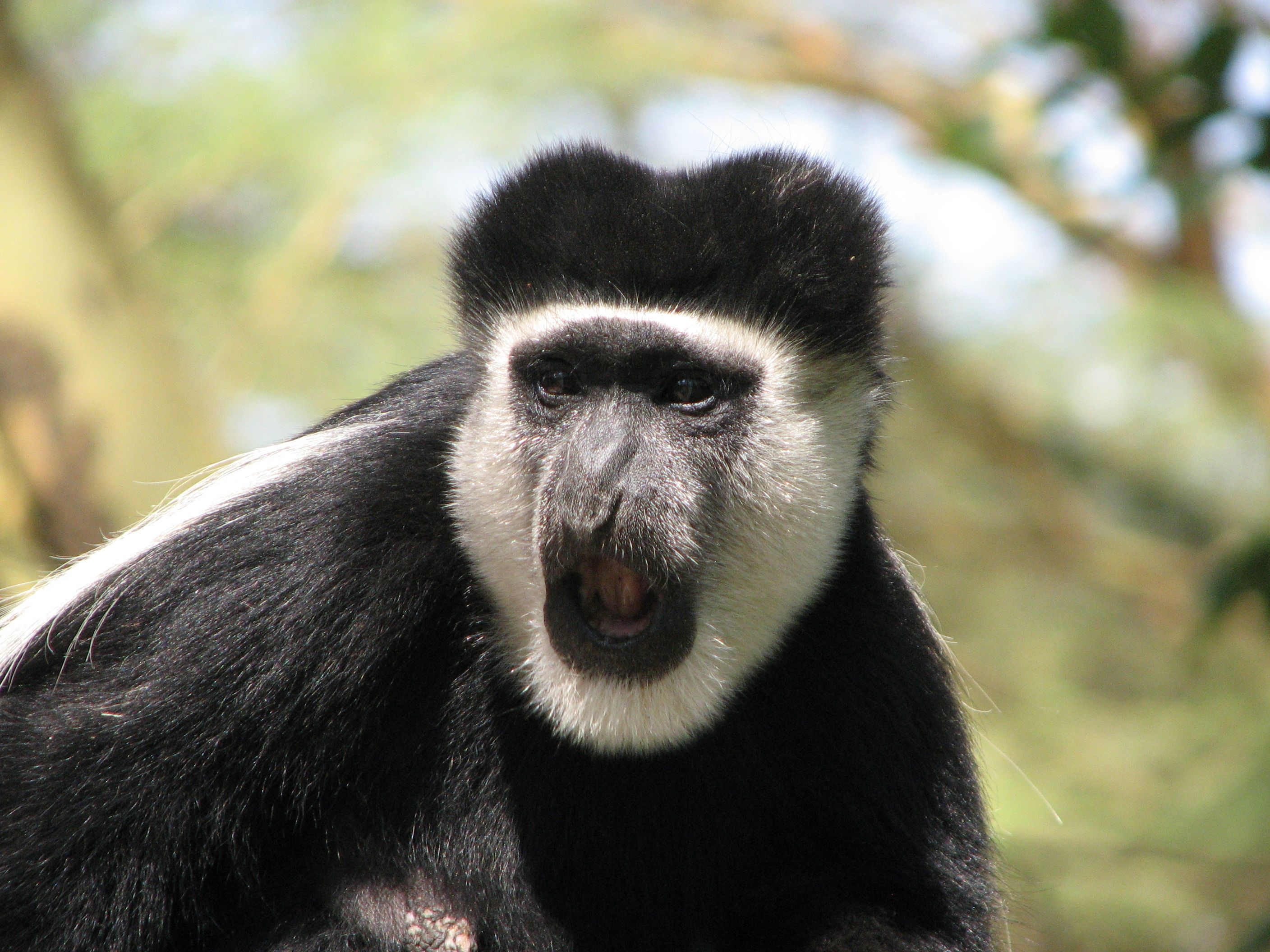 primates | Follow the links to the left to learn more about the primates we ...