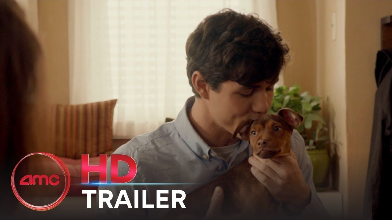 Pin Di Colombia Pictures 720p Hd A Dog S Way Home
