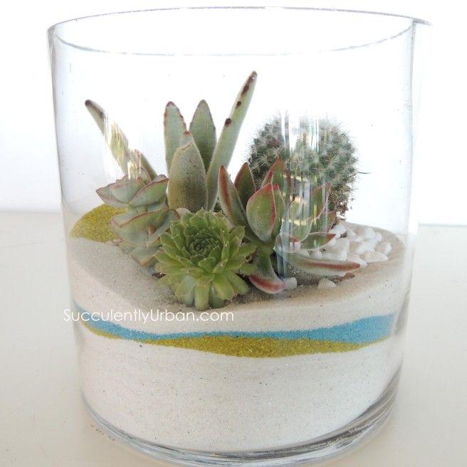 Succulent Terrarium White Sand In Cylinder San Diego Only Diy