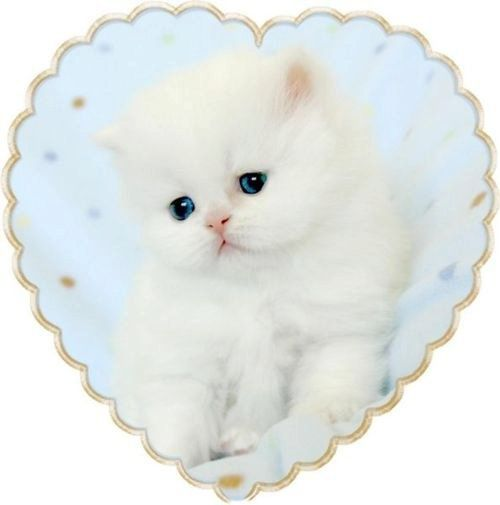 pale blue heart with white kitty
