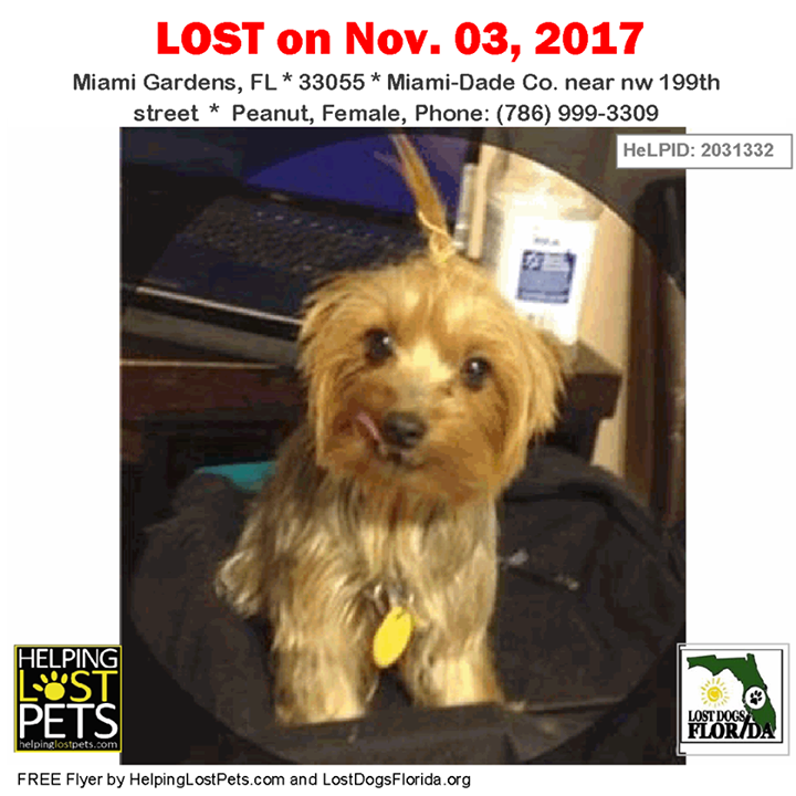 Pin on Lost Dogs