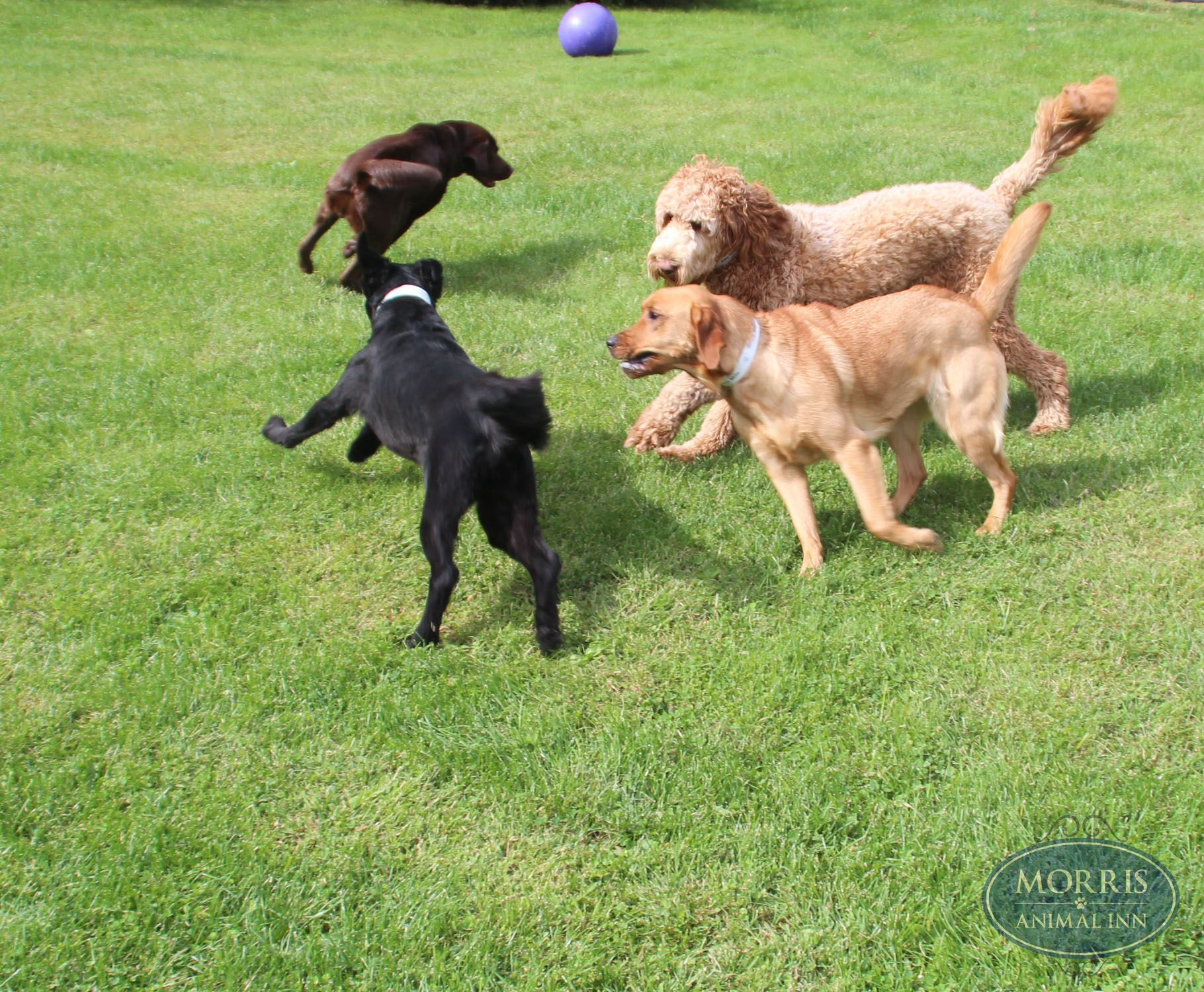 Safe And Fun Dog Daycare Programs In Morristown Nj Dog Daycare