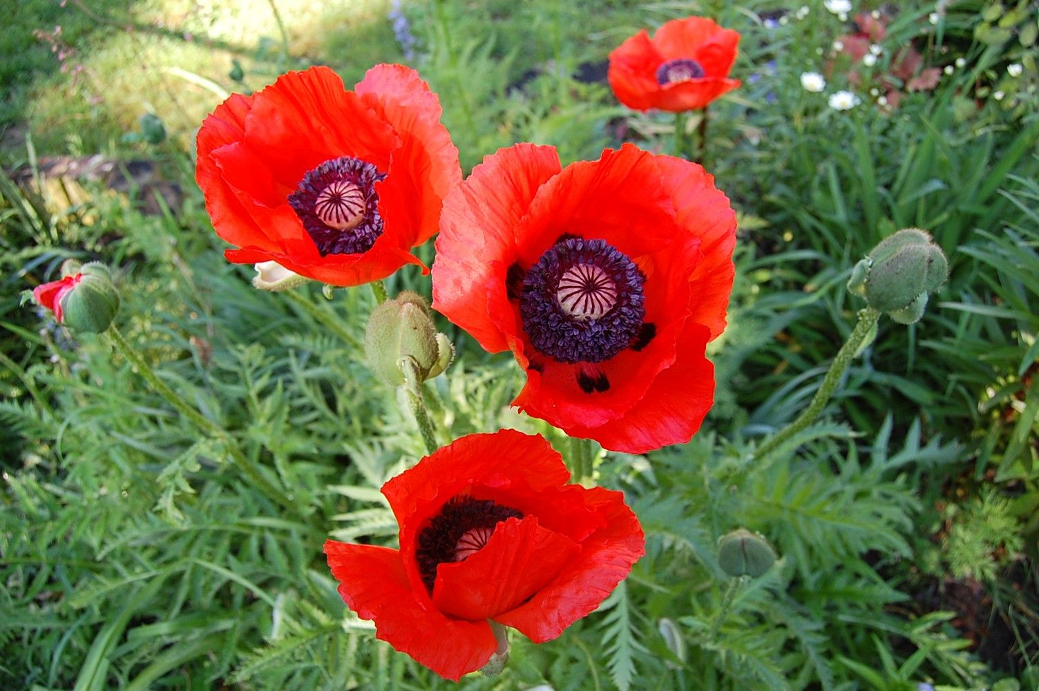 I love poppies, they just shout orange!