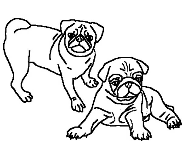 Two Beautiful Pug Coloring Page Color Luna In 2020 Coloring Pages Love Coloring Pages Pugs