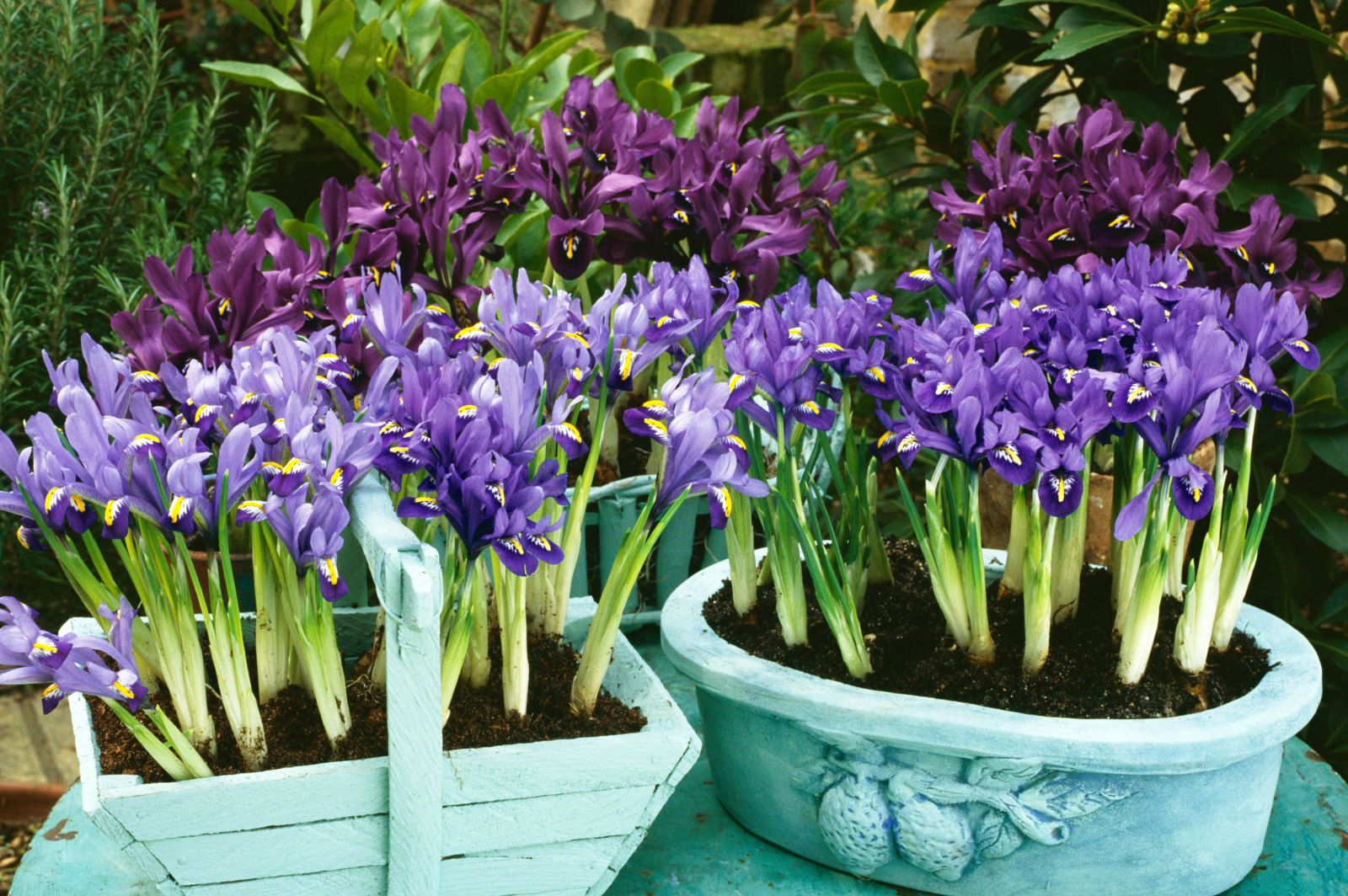50 Flowers You Should Have In Your Garden Flower Pictures Iris