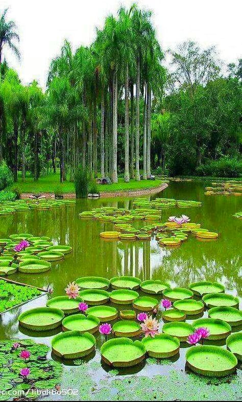 Pin de Alena Noble en Naturalista Pinterest Paisajes, Naturaleza - paisajes jardines