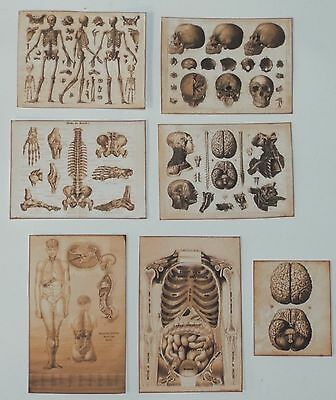 Dollhouse miniature handcrafted Antique SEPIA COLOR medical posters 1/12th scale | eBay