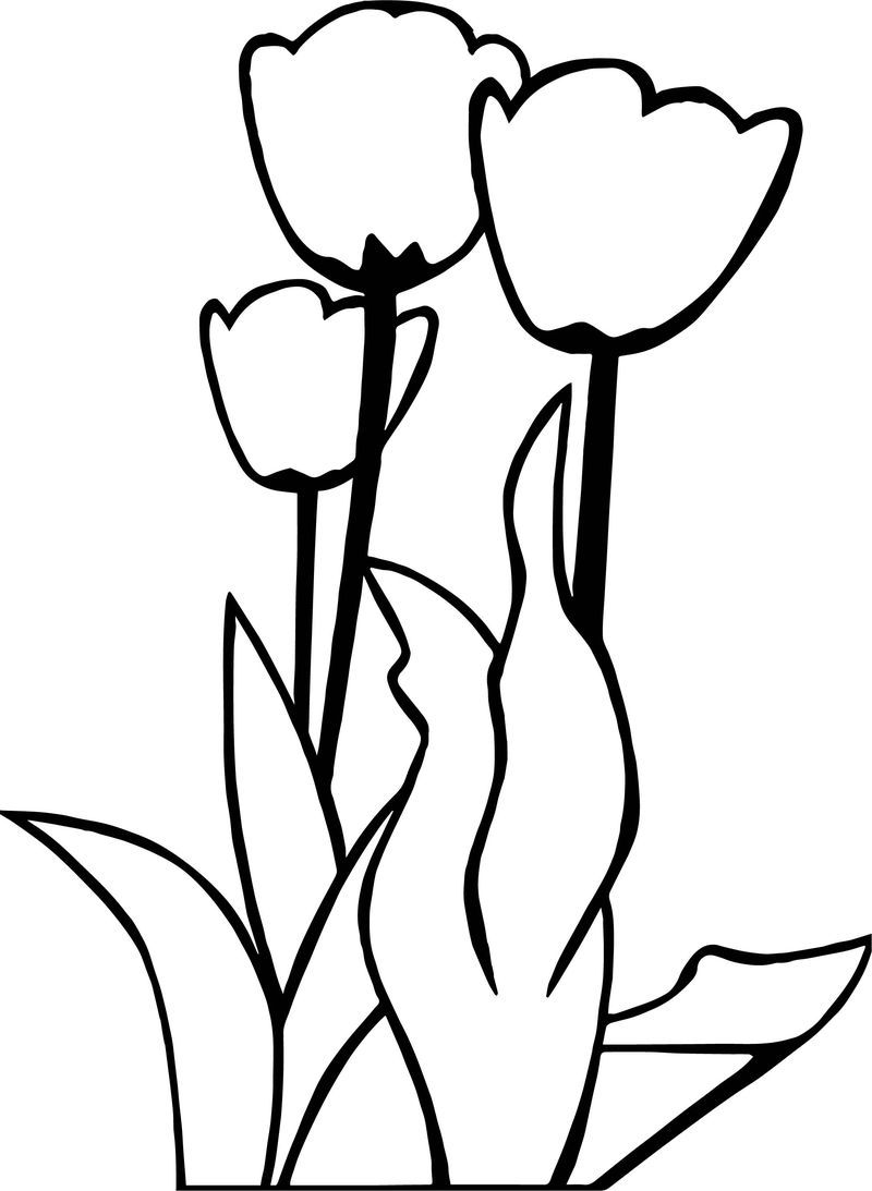 Tulips Flower Coloring Page See the category to find more ...