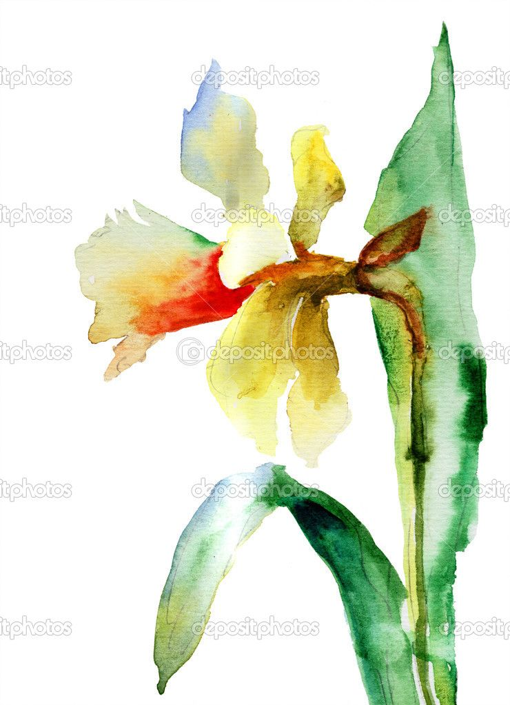 Narcissus for my dad | Watercolor flowers paintings ...