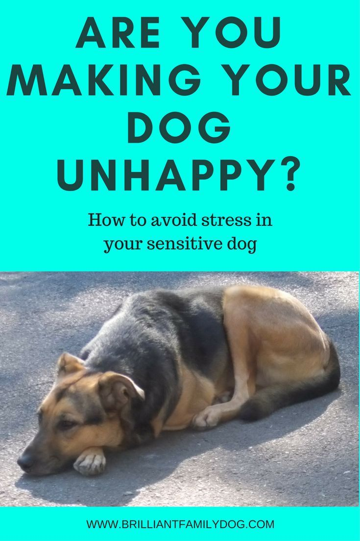 Fearful Dog Training Enrichment For Fearful Dogs Fearful Dog