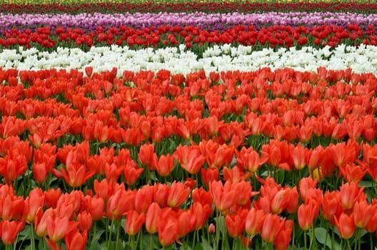 lips-flowers-fish-eye-red-66902