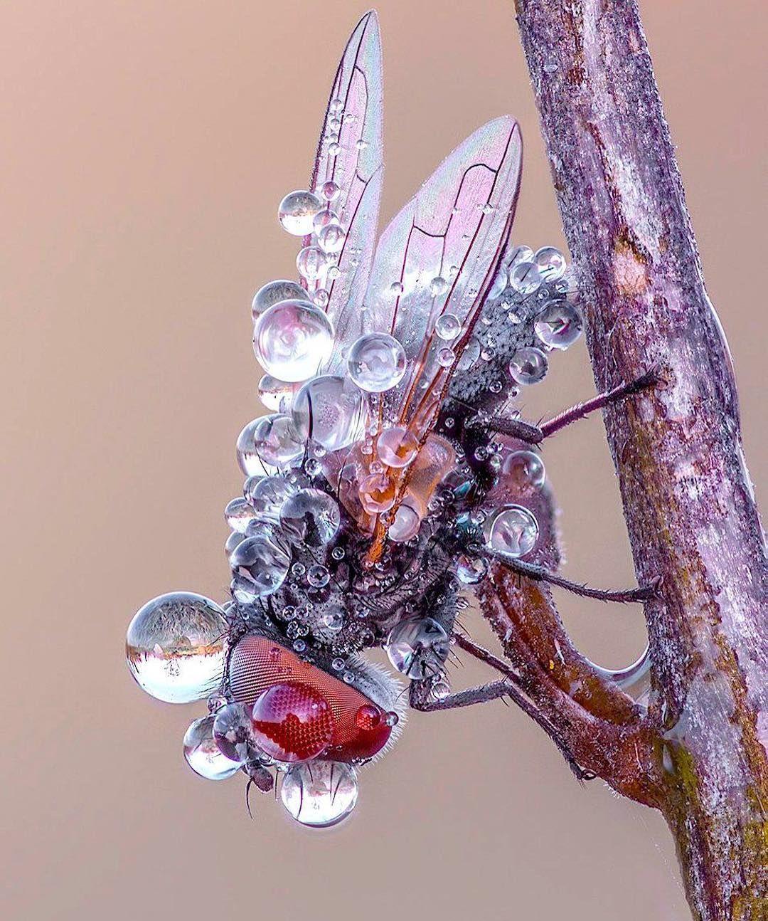 a rosée du matin sur une mouche. #insectes #animaux #nature  #trustmyscience⠀ ⠀ Crédits | Nature animals, Wildlife nature, Wildlife  animals
