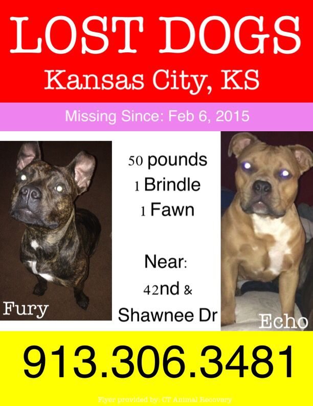 Missing In Kcks Two American Bulldog Mixes Echo And Fury Losing