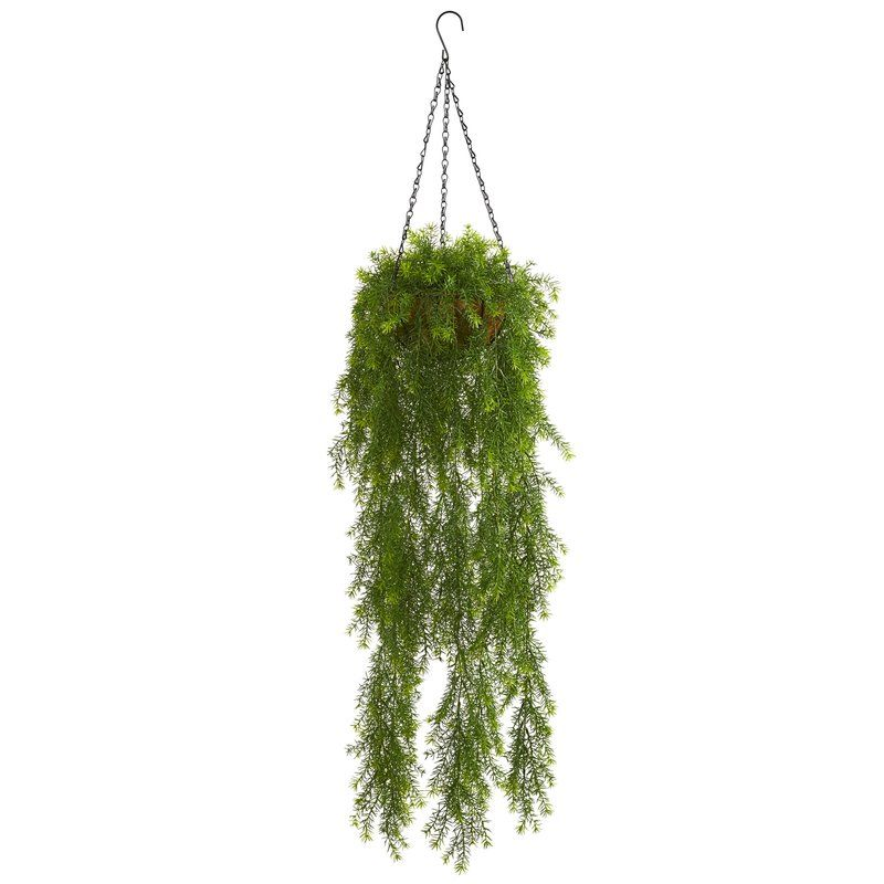 Willow Artificial Hanging Basket Ivy Plant in Planter is part of Ivy Plant decor - This Willow Artificial Hanging Basket Ivy Plant in Planter has long, cascading leaves that hang down  The small leaves add depth and texture to the piece and will match any decor setup  Coming in a hanging basket, this plant would look great hung above your kitchen island over the sink or a bowl of fruit