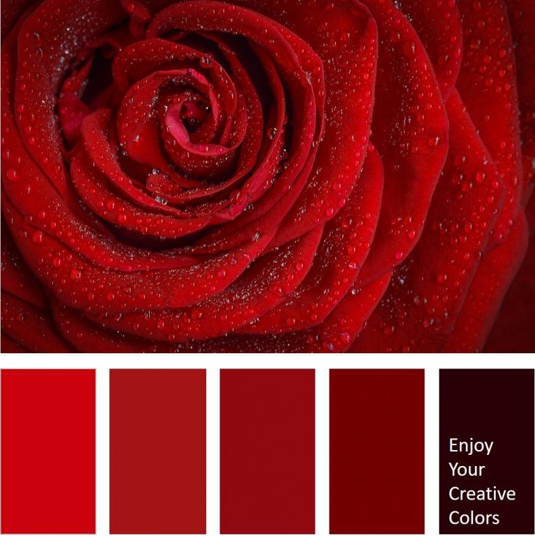 Millionshade Com Enjoy Your Creative Colors Red Colour Palette