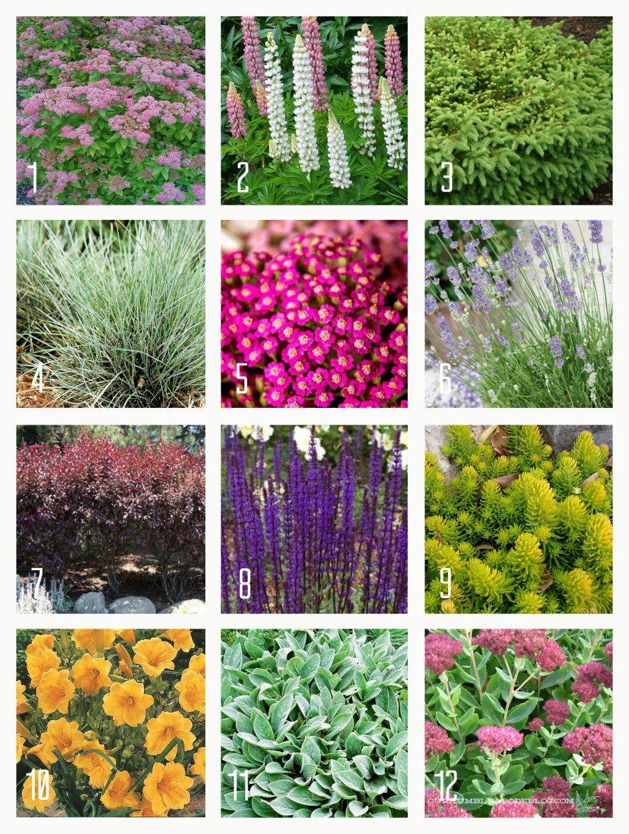 Container gardening ideas for full sun - Twelve Full Sun Plants