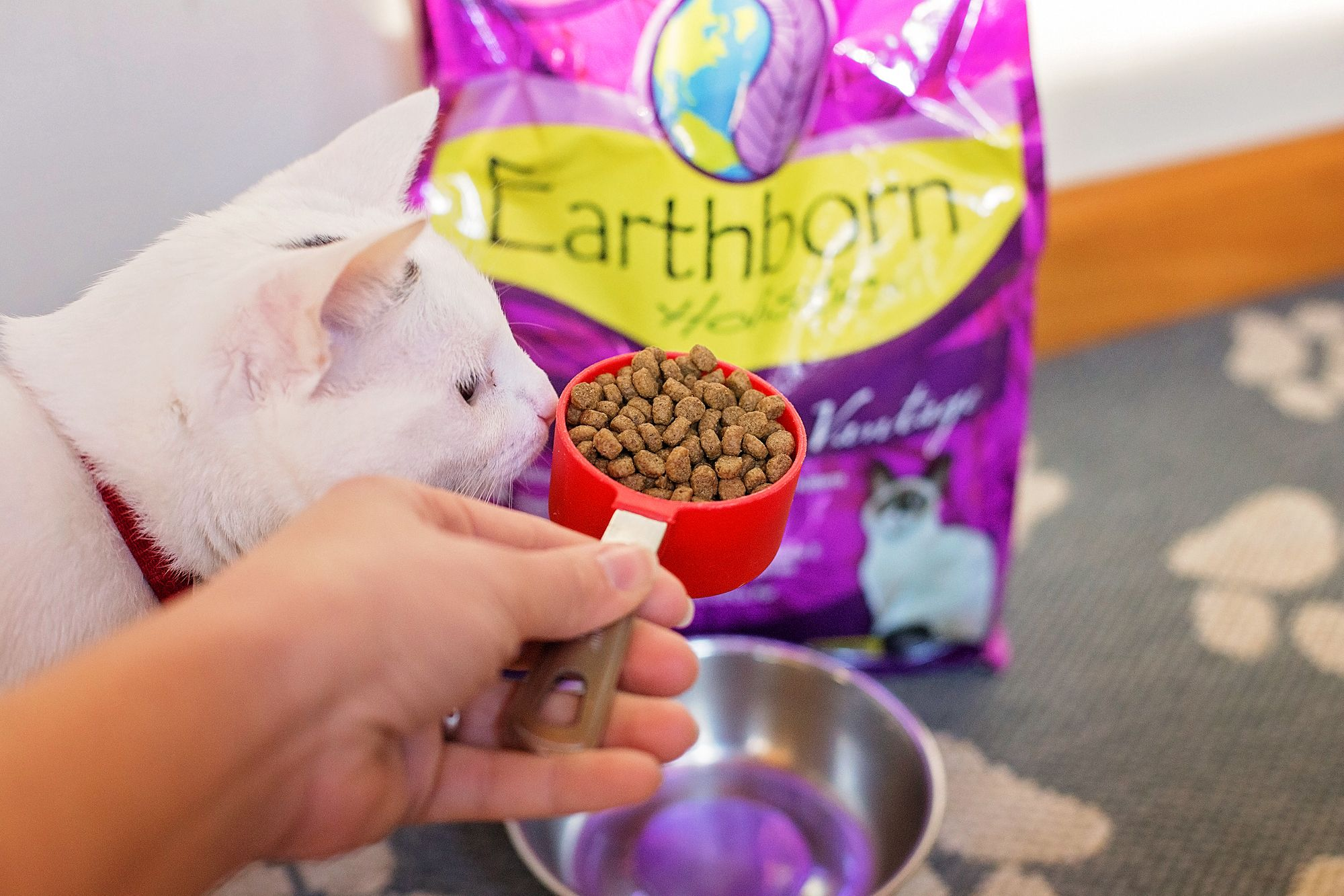 Earthborn Holistic Feline Vantage Dry Kibble For Cats In 2020 Holistic Cat Food Fermentation Products Cat Diet